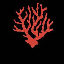 Calypsonia